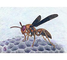 Paper Wasp - Watercolor Pencil Drawing Photographic Print