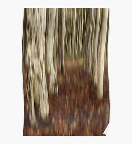 Spotted gum forest Poster