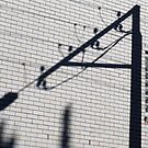 Lamppost shadow on the wall by Dentanarts