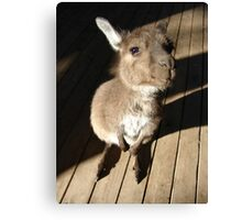 Cute Wallaby Canvas Print