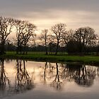 Winter evening reflections, River Barrow, Fenniscourt, County Carlow, Ireland by Andrew Jones