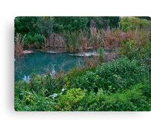 As Green/Bluish as Wetland Can Be Canvas Print