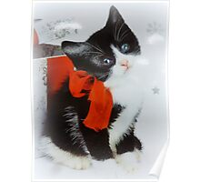 Kitten with red bow Poster