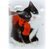 Kitten with red bow Photographic Print