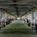 Under Frankston Pier by Carmel Abblitt