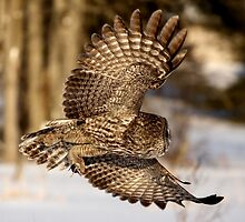"""""""I hope he didn't forget my luggage"""" - Great Grey Owl by Jim Cumming"""
