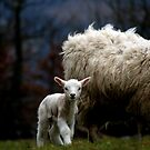 little lamb...  by Gregoria  Gregoriou Crowe