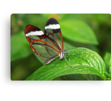 Greta Oto with Wings of Glass Canvas Print