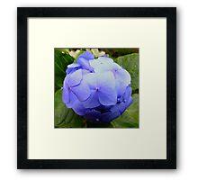 The Little Blue Ball Framed Print