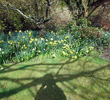 more daffodils by margaret hanks
