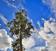 Reach for the sky.... by Peter Doré