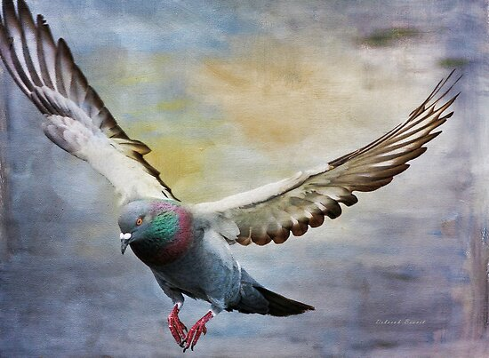 Pigeon On Wing by Deborah  Benoit