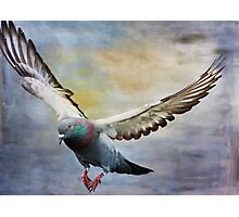 Pigeon On Wing Photographic Print