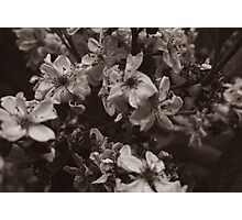Flowers of Malgernon Photographic Print