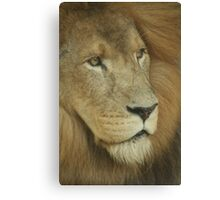 Lion Looking Canvas Print