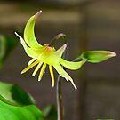 Dog's Violet (In a Peebles' Garden) by photobymdavey