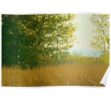 ...morning light.......a view to the lake......... Poster