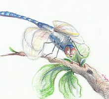 dragonfly by catherine6401