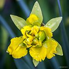 April Shower Daffodil by Mikell Herrick