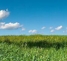 A relaxing lawn glows under a blue and cloudy sky by jazz4ev
