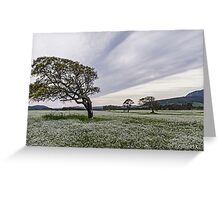 Tree bent by the force of light Greeting Card