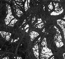Intricate tangle of branches winding by jazz4ev