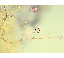 soft scent of spring Photographic Print
