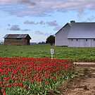 Barns and Tulips by Mike  Kinney