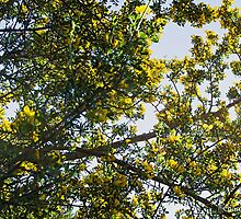 Broom branches laden with flowers by jazz4ev
