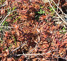 dried leaves of Cistus by jazz4ev