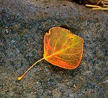 Single Leaf by Gina Dazzo
