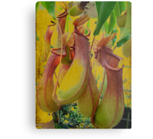 Hanging Pitcher Plant in Vintage Colors Metal Print