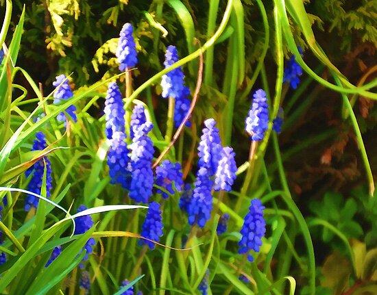 Grape Hyacinth In Topaz by lynn carter