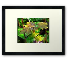 Englands Greenery Framed Print