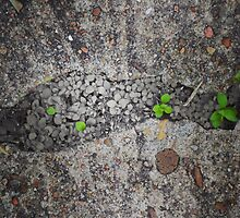 A Crack in the Sidewalk by seetheworld