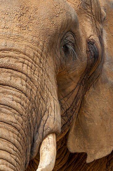 Elephant by Svetlana Sewell