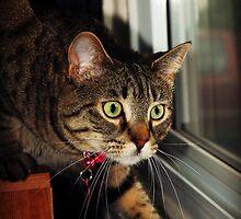 Serious Stalker by jodi payne