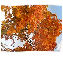 The Colors Brought To Autumn Poster