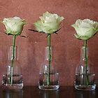 three little roses by gmws