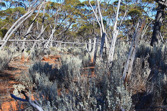 Salt Bush Fence Line by Colin Binks