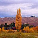Marlborough, Wither Hills by Heike Richter
