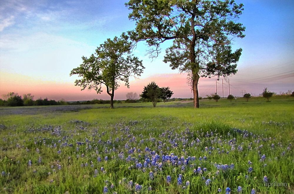 Bluebonnets! by aprilann