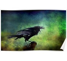 Common Raven Poster