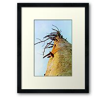 Limbs Framed Print