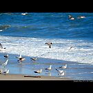 Seagulls At The Atlantic Ocean Beach - Hampton Bays, New York by  Sophie Smith