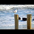 Seagull At The Atlantic Ocean Beach - Southampton, New York by  Sophie Smith