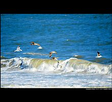 Seagulls Flying Above Atlantic Ocean - Hampton Bays New York by © Sophie W. Smith