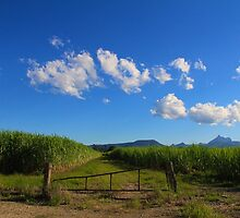 Cane fields  by sarcalder