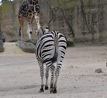 Behind the Zebra by Jeanne Peters