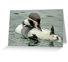 Preening Penguin Greeting Card